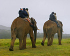 Elephant Back Safaris