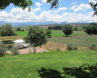 Surval Olive Estate
